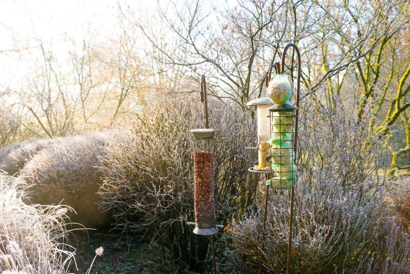 Alimentadores do pássaro com as sementes misturadas no jardim bonito durante o inverno congelado imagens de stock royalty free