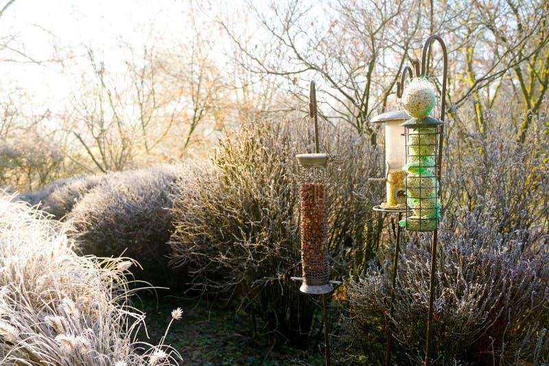 Alimentadores do pássaro com as sementes misturadas no jardim bonito durante o inverno congelado foto de stock royalty free