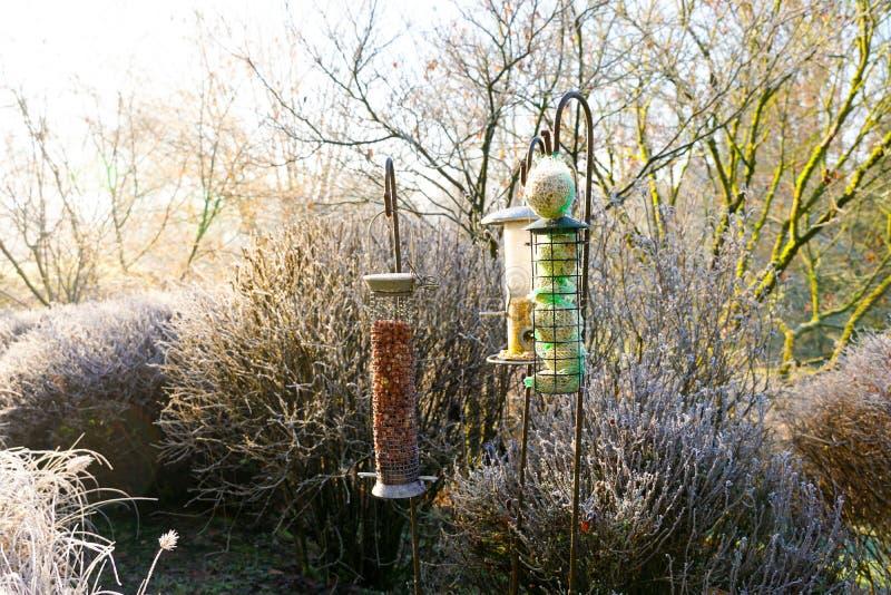 Alimentadores do pássaro com as sementes misturadas no jardim bonito durante o inverno congelado imagens de stock