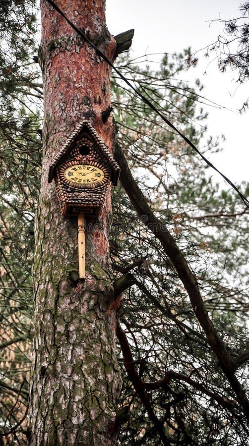 Alimentadores do pássaro nas árvores do outono imagem de stock