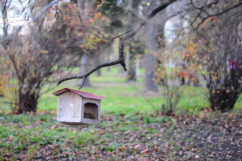 Alimentadores feitos a mão do pássaro que penduram no ramo no dia do outono imagens de stock royalty free