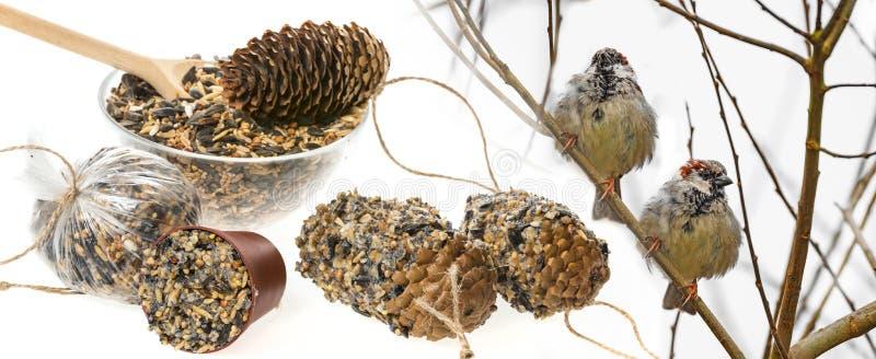 Alimentadores para pássaros das sementes e dos sparows fotografia de stock