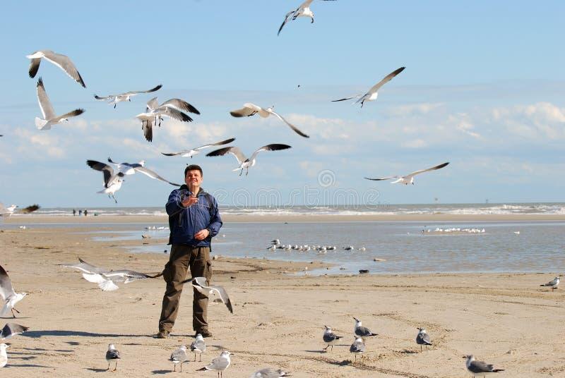 Alimentando as gaivotas imagens de stock