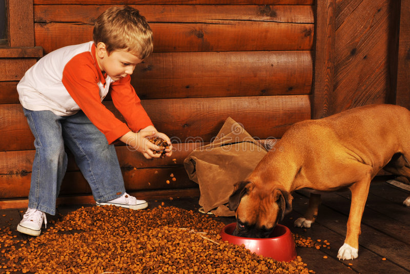 Alimentando o cão fotos de stock
