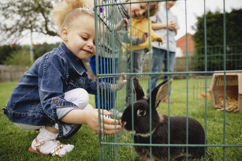 Alimentando o coelho do animal de estimação imagem de stock royalty free