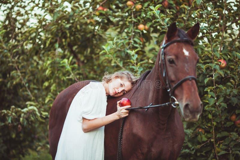 Alimentando um cavalo fotografia de stock royalty free