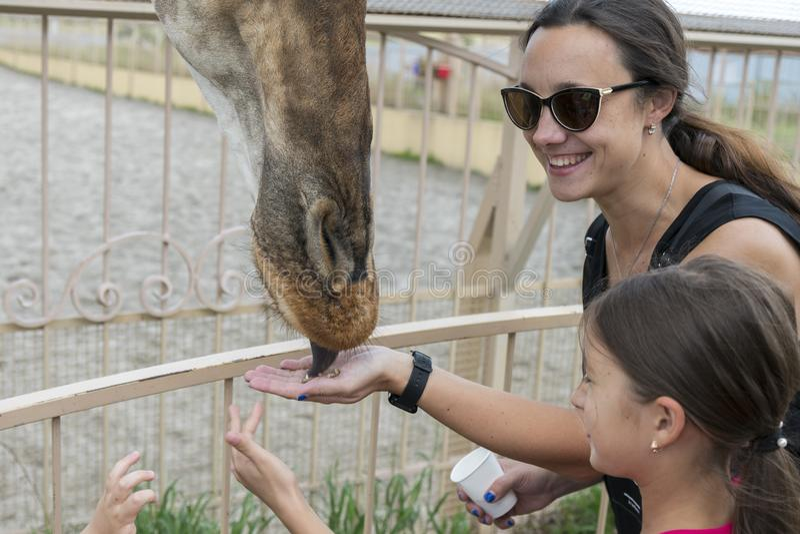 Alimentation de maman et de fille une girafe La jeunes femme et fille de touristes attirantes alimente la girafe mignonne le conc photo libre de droits