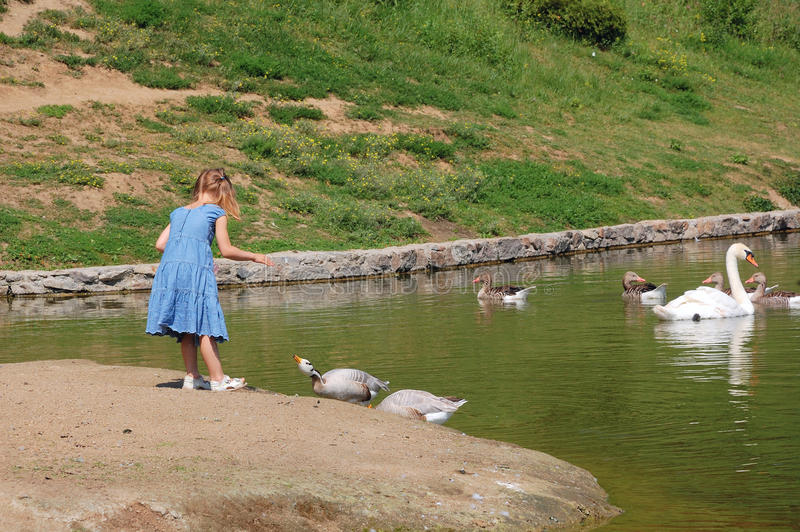 alimentation des enfants d'oiseaux photos stock