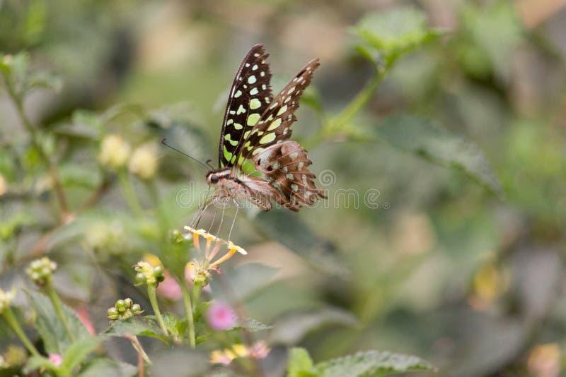 Alimentation lumineuse de papillon image libre de droits