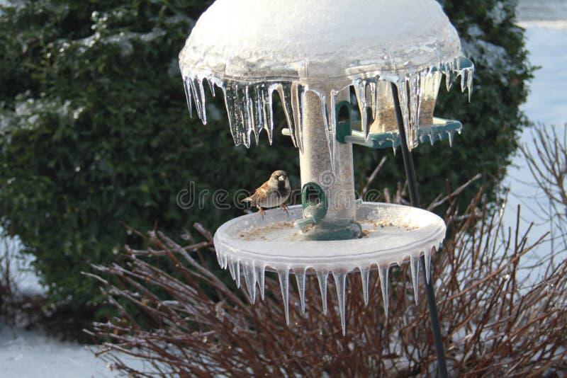 Alimentatore congelato dell'uccello fotografia stock
