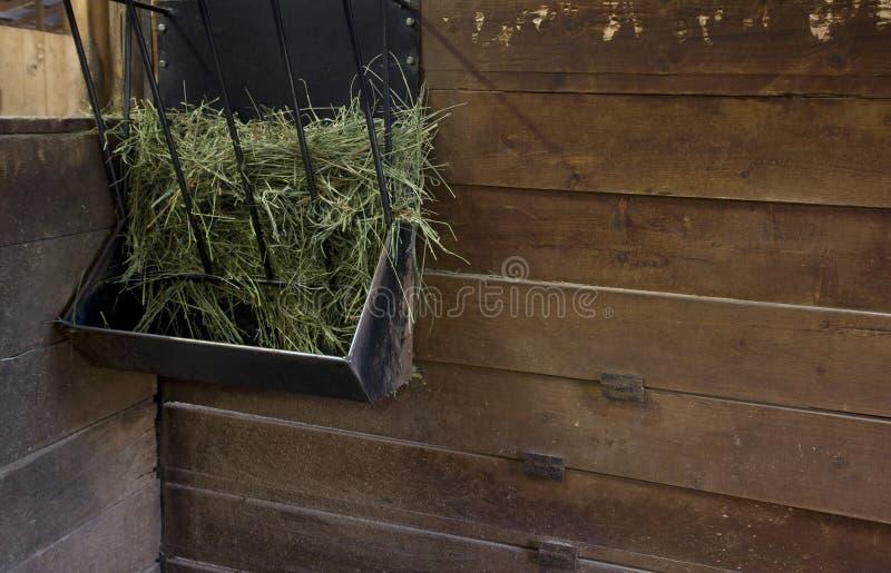 Alimentatore del fieno in una stalla stabile immagine stock