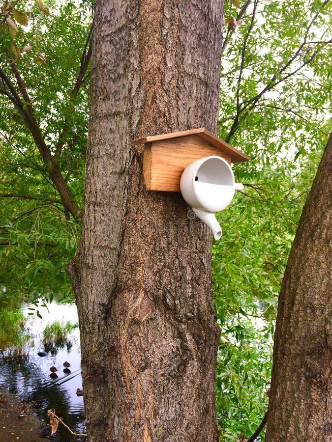 Alimentatore dell'uccello dalla teiera immagine stock libera da diritti