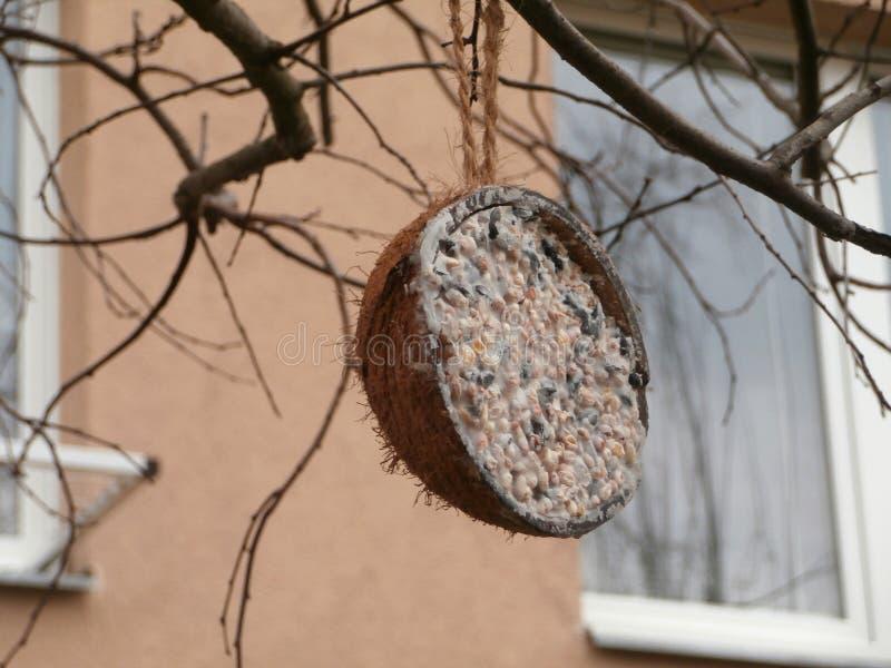 Alimentatore dell'uccello della noce di cocco immagine stock libera da diritti