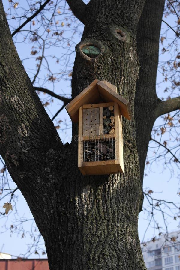 Alimentatore dell'uccello nel parco su un albero fotografia stock libera da diritti