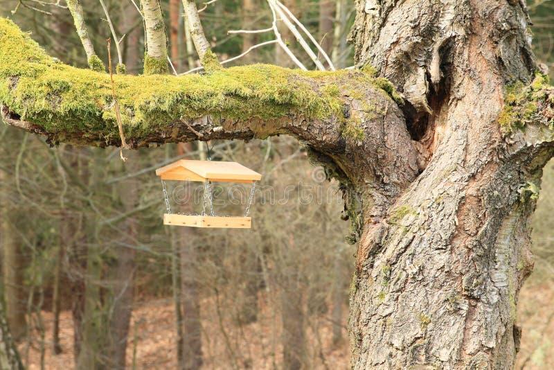 Alimentatore dell'uccello sul vecchio albero fotografia stock