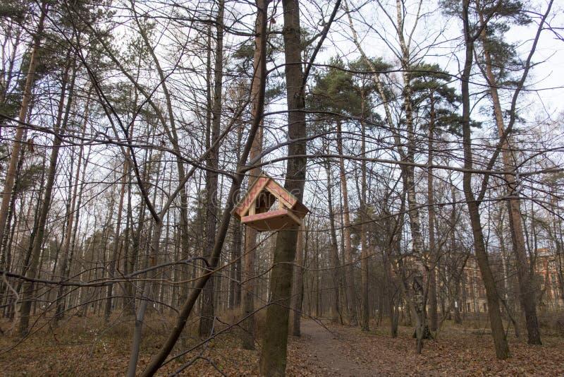 Alimentatore di legno dell'uccello fotografia stock