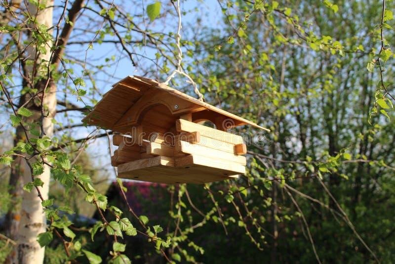 Alimentatore di legno dell'uccello su un ramo di albero fotografie stock