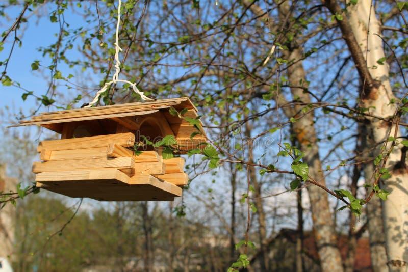 Alimentatore di legno dell'uccello su un ramo di albero immagini stock