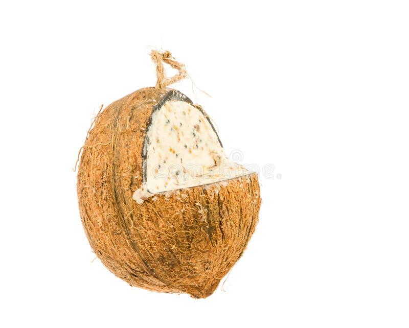 Alimentatore grasso di Cocunut per gli uccelli immagine stock libera da diritti