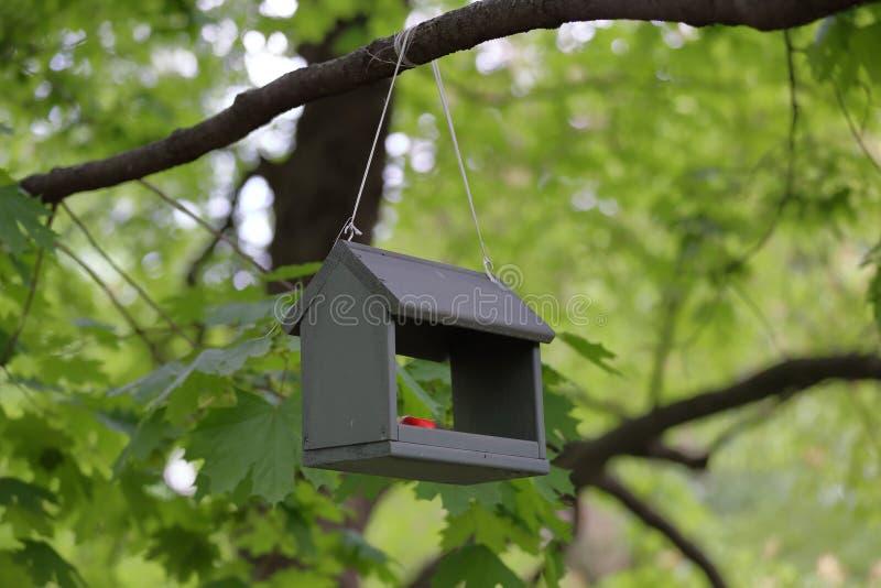 Alimentatore per gli uccelli nel parco immagini stock libere da diritti