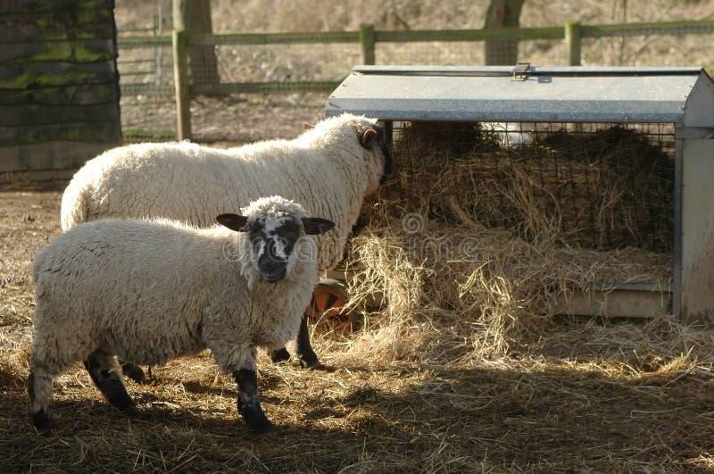 Alimentazione animale fotografie stock libere da diritti