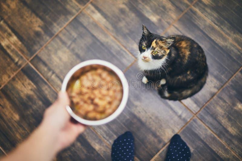 Alimentazione aspettante del gatto affamato immagine stock