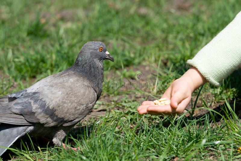 alimentazione dei bambini dell'uccello fotografia stock libera da diritti