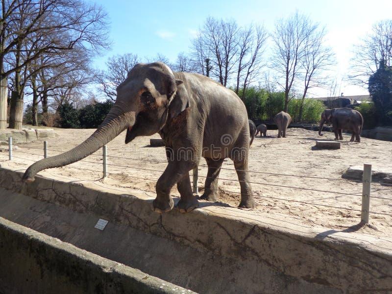 Alimentazione dell'elefante fotografie stock