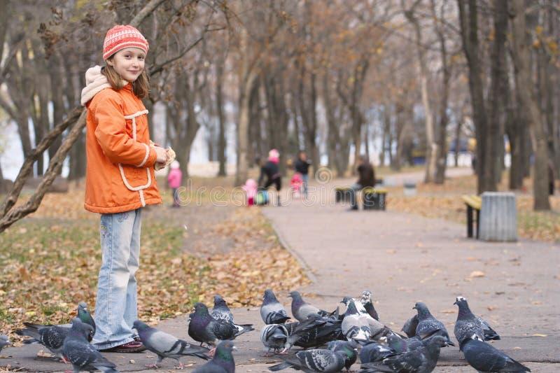 Alimentazione della ragazza piccioni fotografia stock libera da diritti