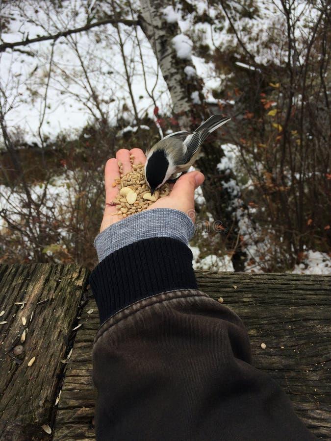 Alimente los pájaros fotografía de archivo