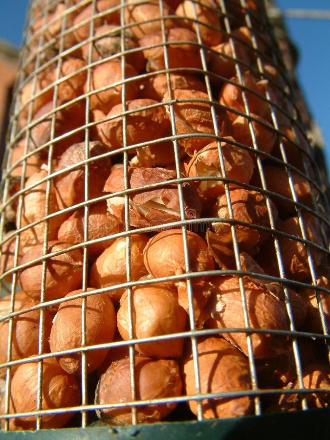Download Alimente os pássaros foto de stock. Imagem de escudos, alimento - 58028