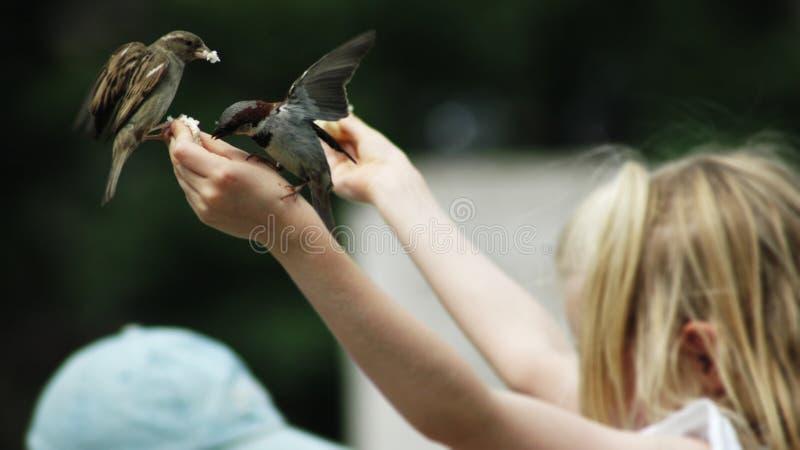 Alimente os pássaros fotografia de stock