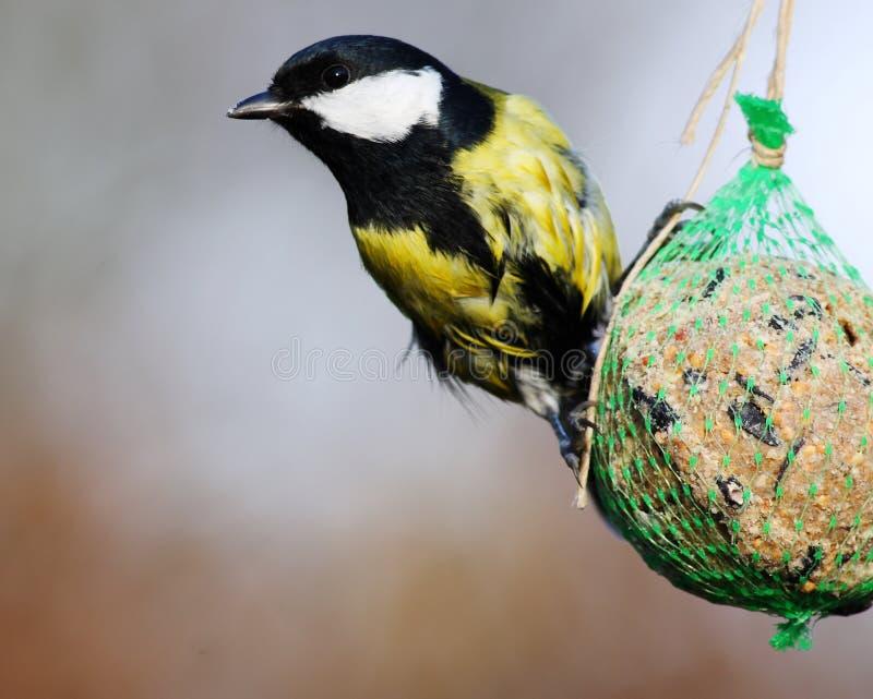 alimenter d'oiseaux photo libre de droits