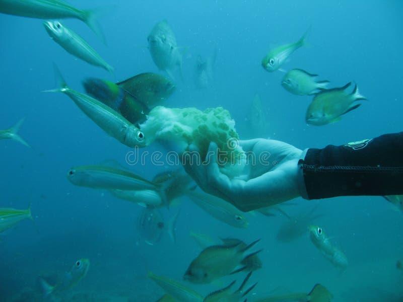 Alimenter de poissons photographie stock libre de droits