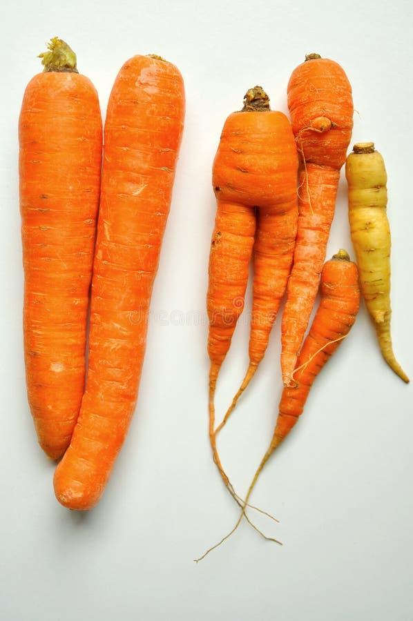 Alimento biológico contra o alimento do gmo: cenouras foto de stock