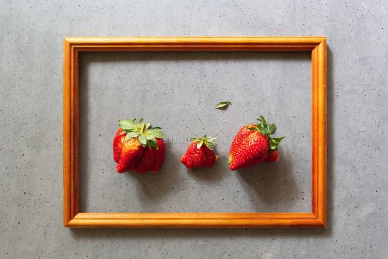 Alimento brutto Fragole nostrane organiche nel telaio di legno sul fondo grigio del cemento Frutta e verdure imperfette divertent immagini stock libere da diritti