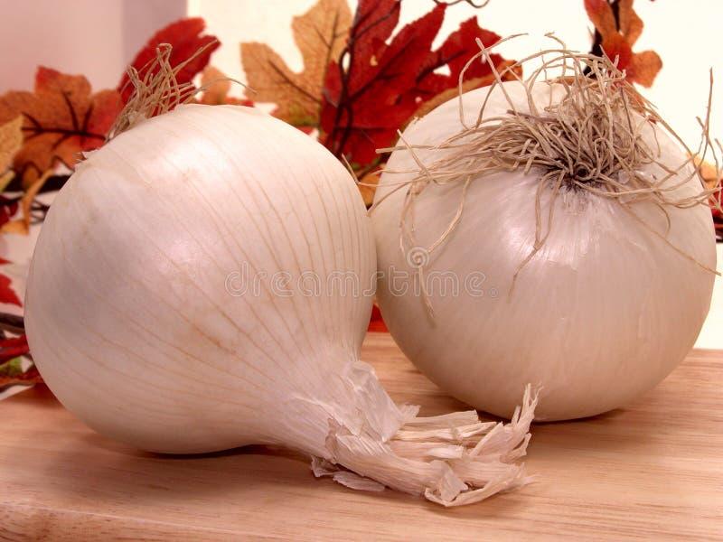 Alimento: Cipolle bianche fotografia stock libera da diritti