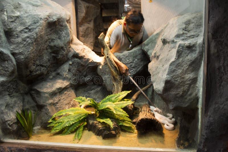 Alimento d'alimentazione della gente tailandese al serpente bianco in gabbia al parco pubblico fotografia stock libera da diritti