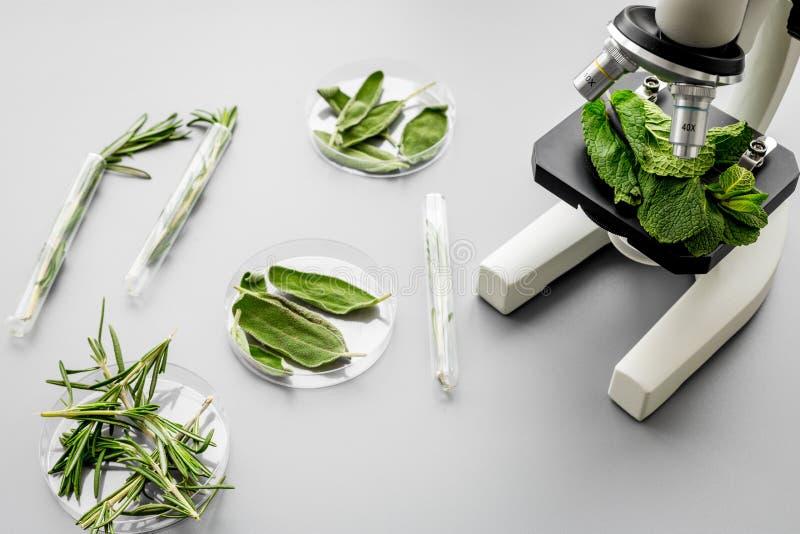 Alimento da segurança Laboratório para a análise de alimento Ervas, verdes sob o microscópio no espaço cinzento da cópia da opini fotos de stock royalty free