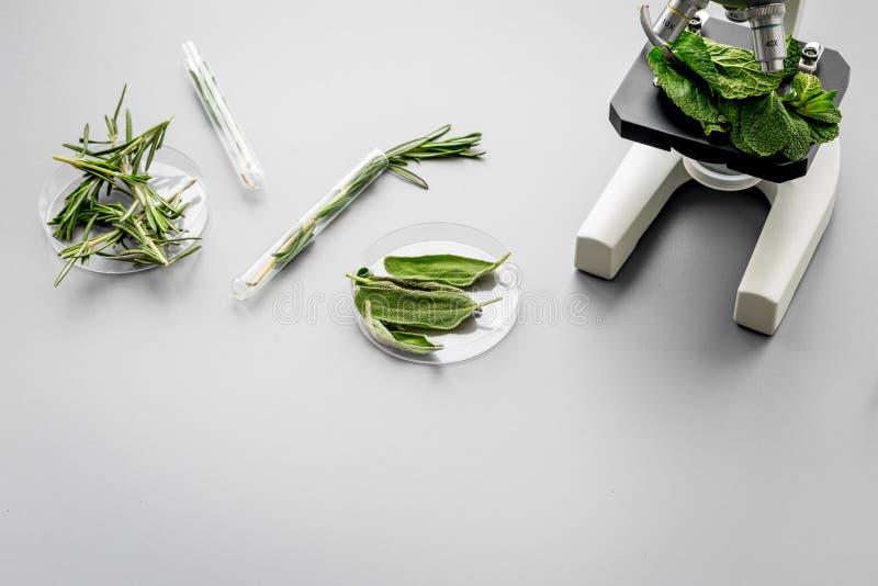 Alimento da segurança Laboratório para a análise de alimento Ervas, verdes sob o microscópio no espaço cinzento da cópia da opini foto de stock royalty free