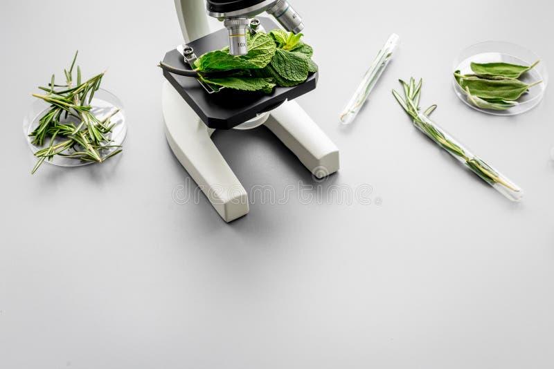 Alimento da segurança Laboratório para a análise de alimento Ervas, verdes sob o microscópio no espaço cinzento da cópia da opini imagem de stock royalty free