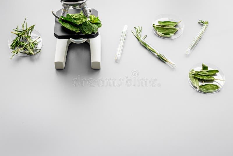 Alimento da segurança Laboratório para a análise de alimento Ervas, verdes sob o microscópio no espaço cinzento da cópia da opini imagens de stock