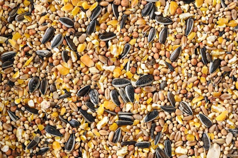 Alimento de pássaro das sementes misturadas como o girassol, milho, painço e mais, textura completa do fundo do quadro com espaço imagens de stock