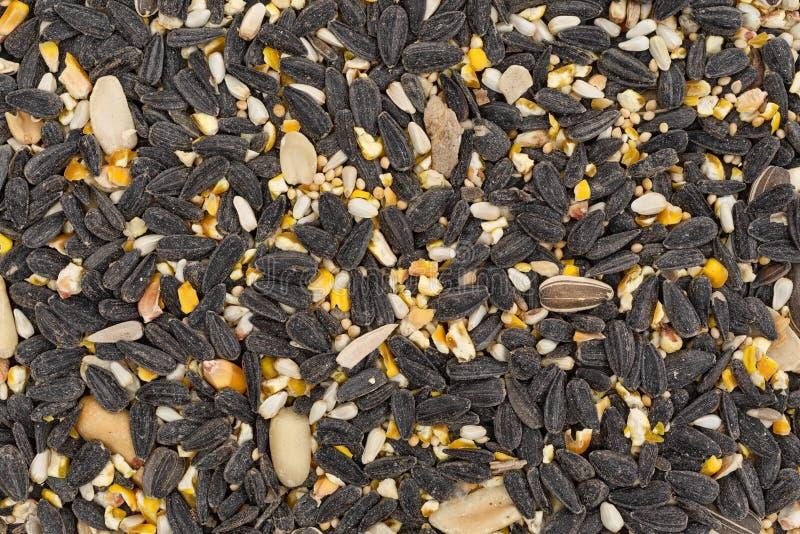 Alimento de pássaro maioria com sementes e painço de girassol imagens de stock