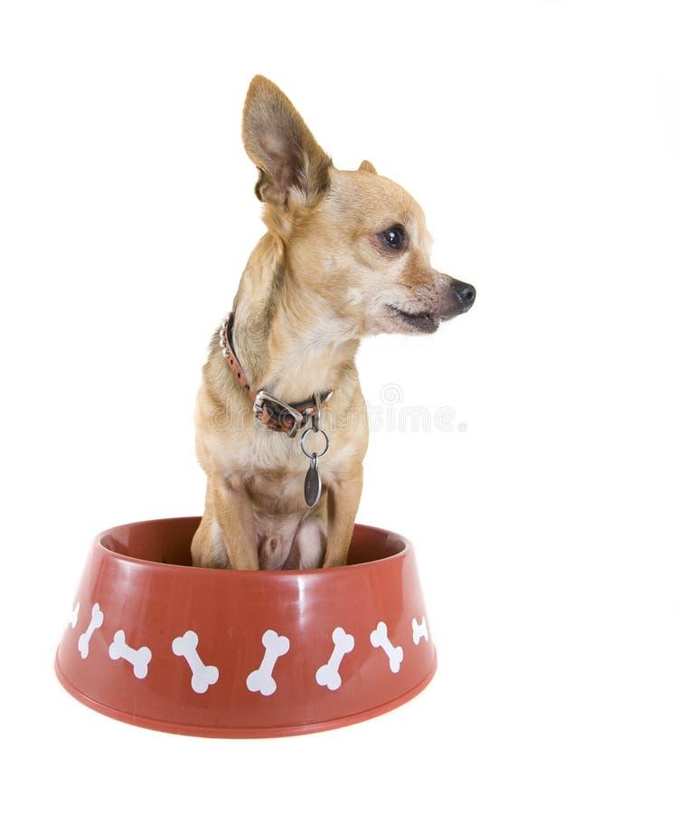 Download Alimento de perro imagen de archivo. Imagen de collar - 7280469