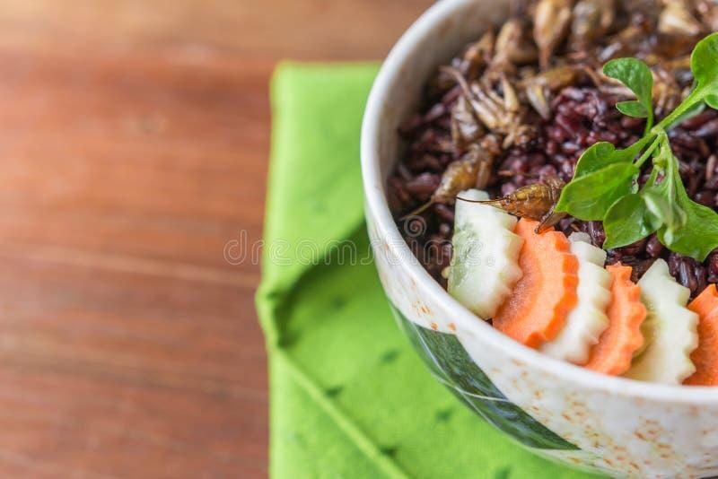 Alimento degli insetti con la bacca del riso fotografia stock libera da diritti