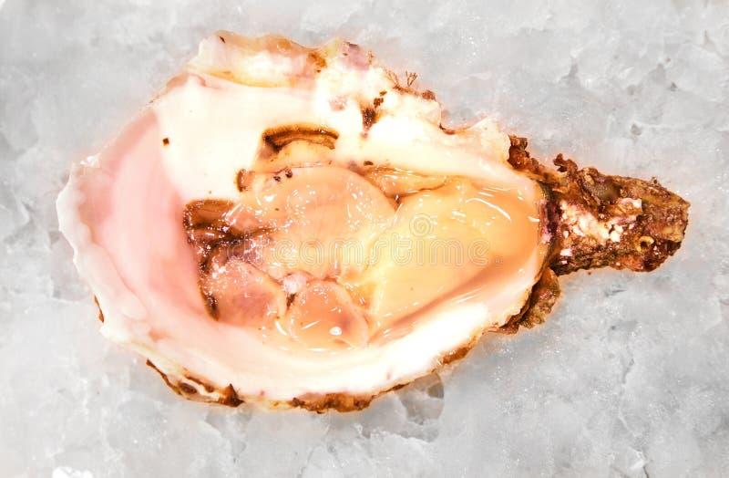 Alimento del mar Mediterraneo dell'ostrica fresco sul mercato di Barcellona del ghiaccio immagini stock