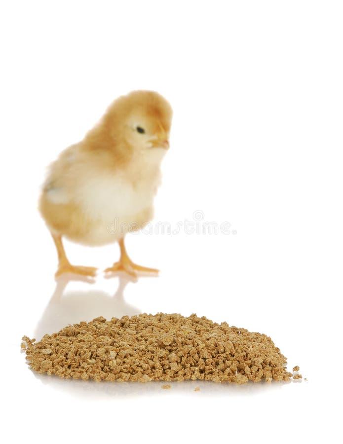 Alimento del pollo immagine stock libera da diritti