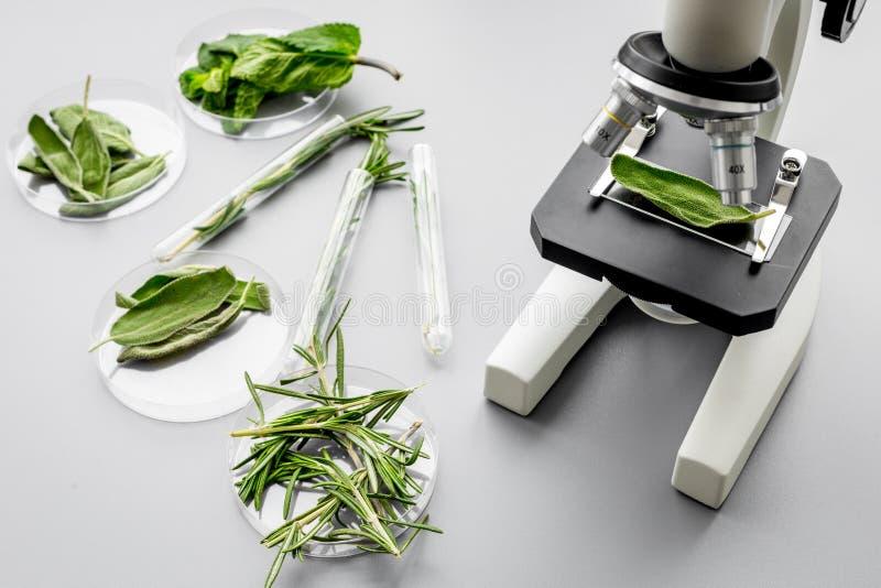Alimento di sicurezza Laboratorio per analisi alimentare Erbe, verdi sotto il microscopio sulla vista superiore del fondo grigio immagine stock