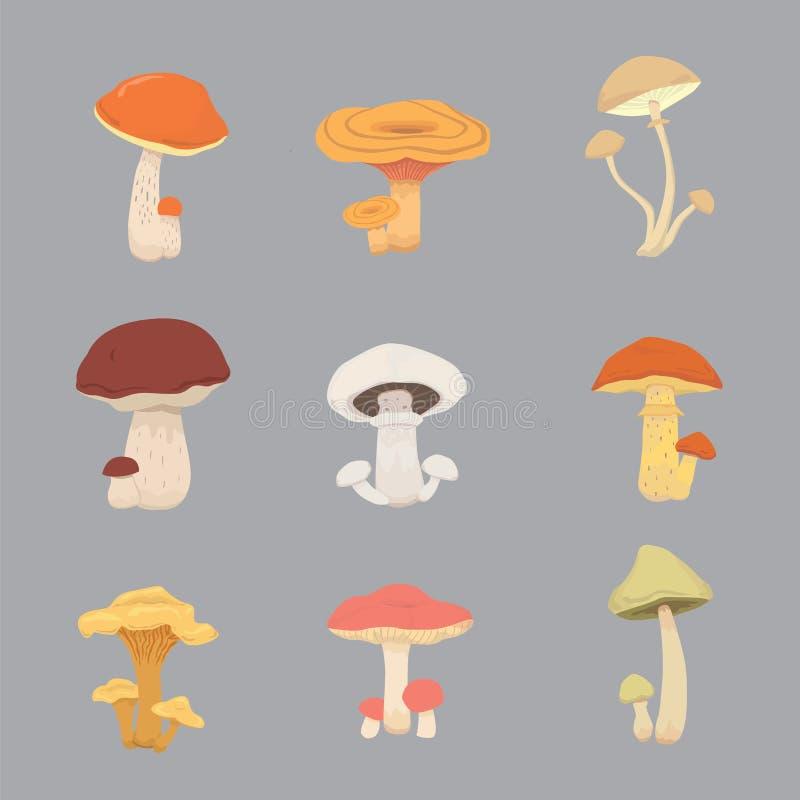 Alimento do cozinheiro da natureza do cogumelo, tipos diferentes de cogumelos comestíveis ilustração stock